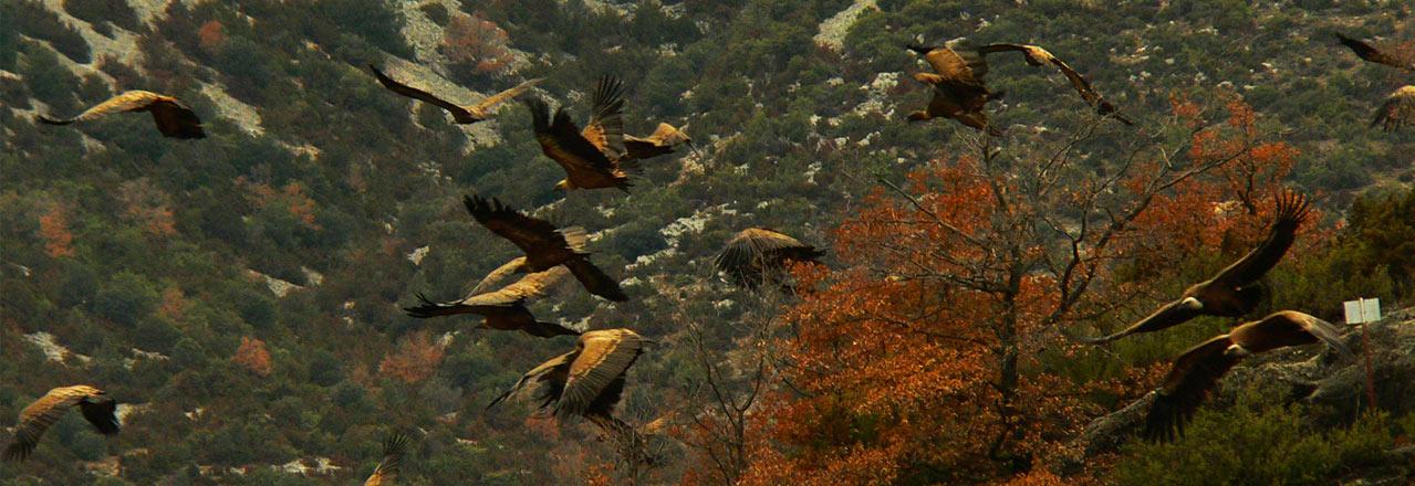 Observations de rapaces, vautours et ornithologie en Sierra de Guara près de Huesca avec Expediciones-sc.es
