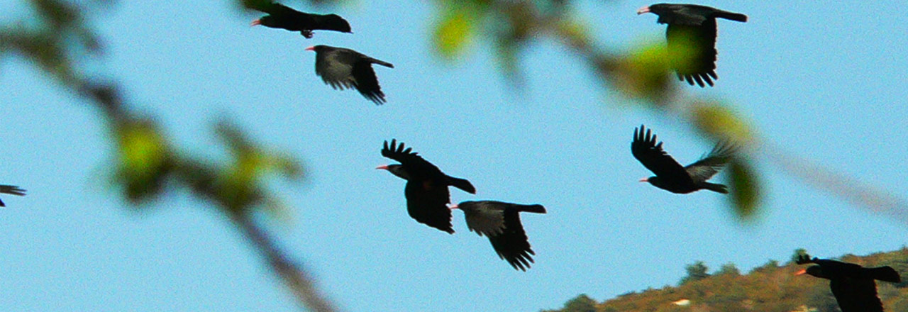 Ornithologia en Sierra de Guara