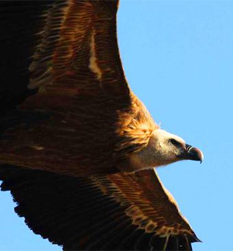 Ornithologie et observations de rapaces et oiseaux en Sierra de Guara avec Expediciones-sc.es