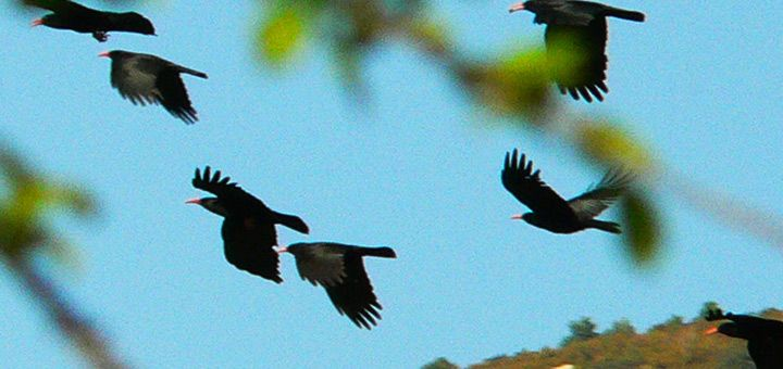 Ornitology and bird watching in Spain in the natural parc of Sierra de Guara with Expediciones